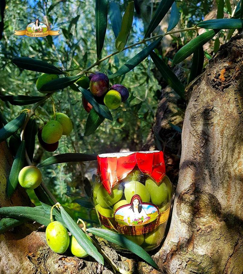 CROP  NOCELLARA OLIVES 2018
